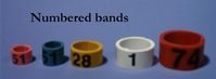 Numbered Leg Bands Size 7 (12mm)