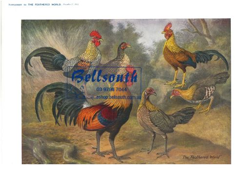 Feathered World Print Ancestors by Atkinson